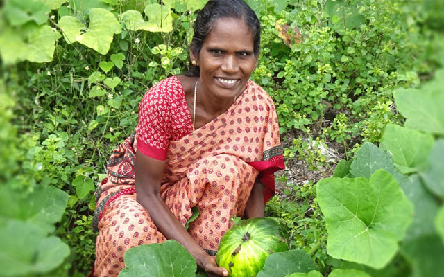 Pic showing a woman picking produce